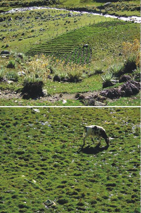 agricultura-ganaderia