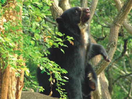 Innumerable es la biodiversidad y el endemismo que se encuentran en  La Culata, la cual es representada por animales como los Osos Frontinos
